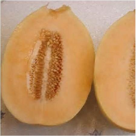 S024X01. Canataloupe - Crenshaw Melon