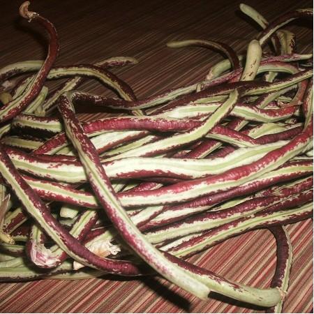 S003X01. Bean - Purple Yard Long Bean X 1