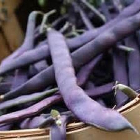 S031X01. Bean - Purple Podded Pole Bean x 1