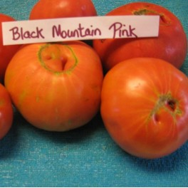 Black Mountain Pink