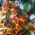 Heirloom tomato variety pack 12 different kinds! New varieties for 2018