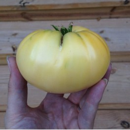 Great White heirloom tomato