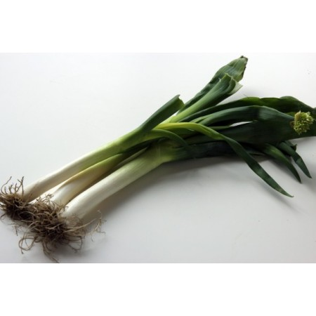 S135X01. Dae-Pa Korean Large Green Onion X 1
