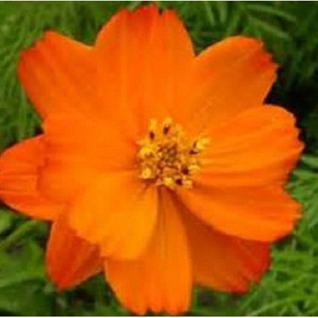 Bright Lights Orange